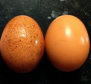 800px-Egg_colours