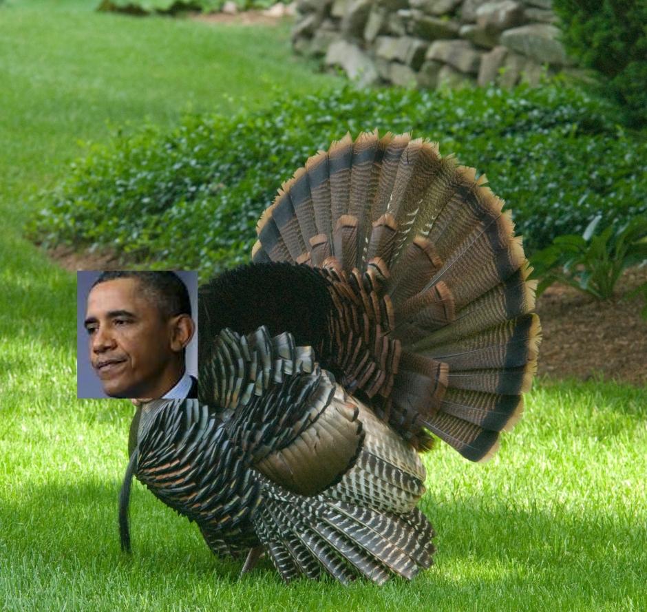 Wild Turkey a-1