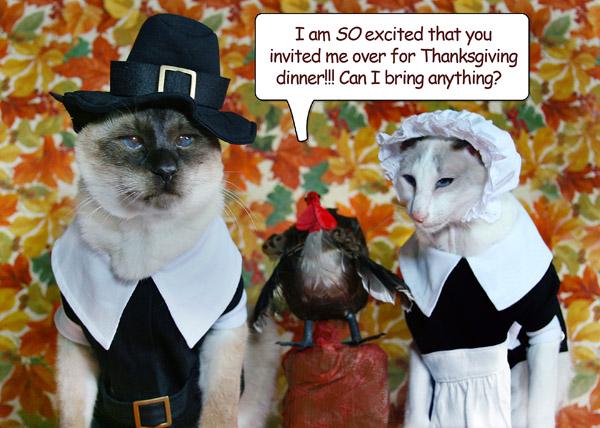 thanksgiving-skeezix-mao-mousebreath