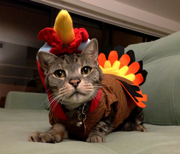 turkey-cat-4